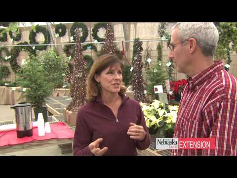 Growing Media for Container Gardening