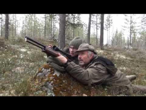 Jagd auf Auer- und Birkwild in Schweden