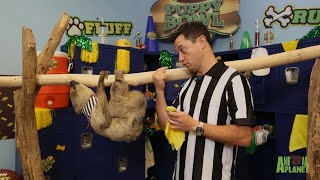 There's A New Referee At Puppy Bowl XIV by Animal Planet