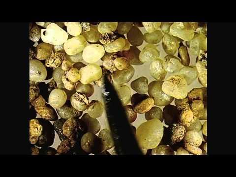 Sand unter dem Mikroskop - Exploring Sedimentary Prozesse (2/4)