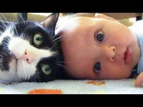 simpatici gatti e cani amano i bambini. compilation 2015