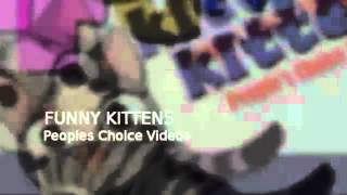 Funny Kittens VIdeos YouTube video