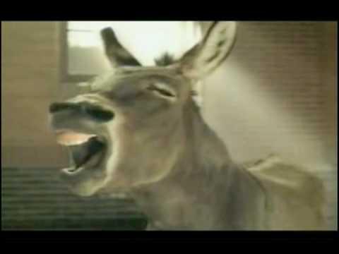 Free The Bowl 2009- Free the Donkey!