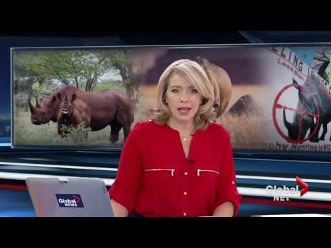 U.S. hunting club auctions permit to hunt near-extinct rhino