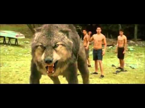 Jacob se transforma en lobo (видео)