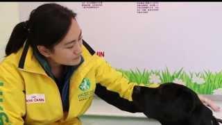 <h5>導盲犬與訓練員的生活點滴 (HKSEDS) </h5>