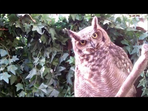 owl - So Funny Owl sees a cat.