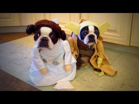 Funny cat videos - Cute Pets  Lovely Cats And Dogs Wearing Costumes (Part 2) [Funny Pets]
