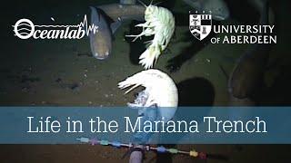 Video Life in the Mariana Trench MP3, 3GP, MP4, WEBM, AVI, FLV Oktober 2018