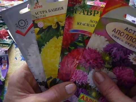 какие цветы можно посеять в январе,феврале (видео)