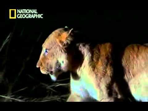Documental La reina de las hienas.avi