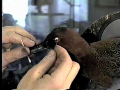 Mounting a Flying Waterfowl