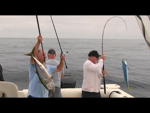 Yellowfin Tuna and Dorado patty hopping The Reel Brother Presents