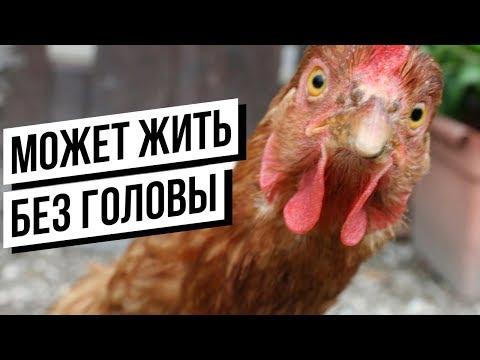 Реальные ЖИВОТНЫЕ ЗОМБИ(Часть 2)! (видео)
