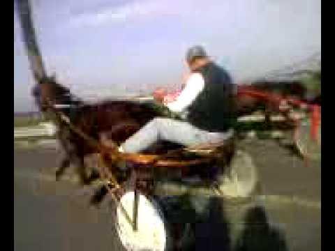 il cavallo più veloce di afragola