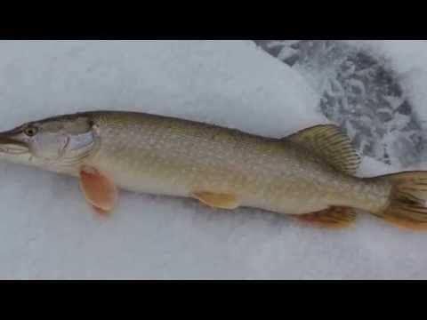 рыбалка в астане на щуку в