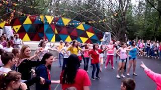 Ромашка, лето 2014 (видео №9)