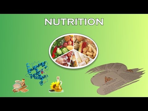 Sports Nutrition For Young Athletes (Nutritional Assessment)
