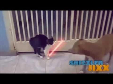 Những chú mèo bá đạo nhất thế giới - Siêu hài