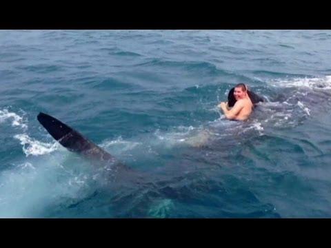 ragazzo cavalca squalo in florida