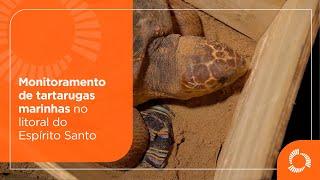 Monitoramento de tartarugas marinhas no litoral do Espírito Santo