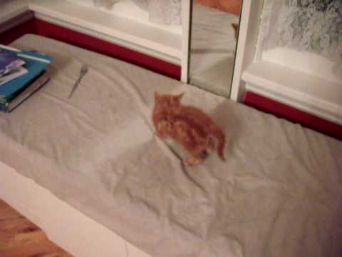 0 Kitten Freaks Himself Out