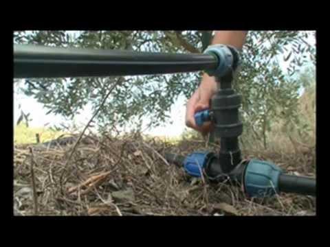 Olivicoltori Sestresi - La filiera dell'olio extravergine di oliva di qualit�