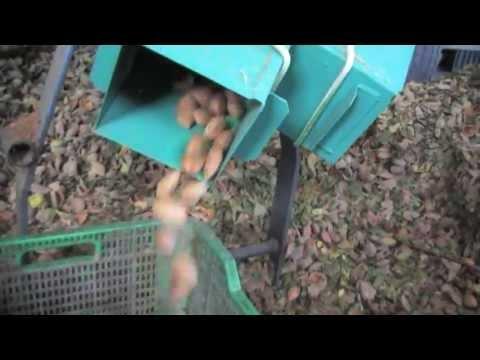 Peladora de almendras de sistema de rodillos especial almendra cáscara blanda