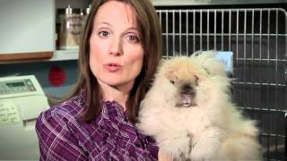 All Creatures Animal Hospital | Caring for your Rabbit