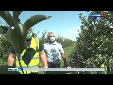 Управлением Россельхознадзора проведен феромониторинг в плодовом саду Ростовской области