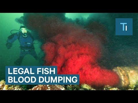 Fish Farm Contaminating Public Water in British Columbia