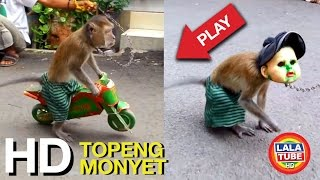 Video lala liat Topeng Monyet - Mongkey Show part 1 MP3, 3GP, MP4, WEBM, AVI, FLV April 2019
