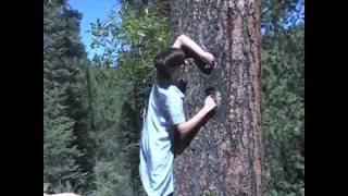hole tree.