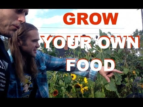Grow Your Own Food In A Suburbian Permaculture Garden