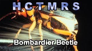 How Creationism Taught Me Real Science 67 Bombardier Beetle
