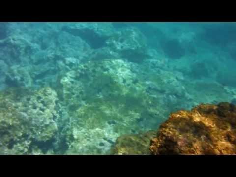 Silvia Francesca Stein Spokane arm amputee films underwater Kirlian