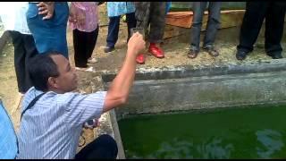 THE MAGIC OF GREEN WATER, drinkable - dapat diminum