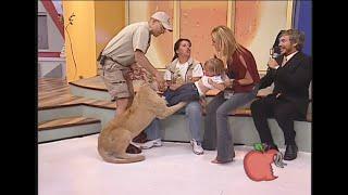 Lew i dziecko występują razem w studiu! Wtedy dzieje się coś co nie powinno się zdarzyć!