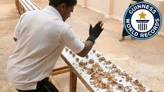 Дебильный рекорд: 212 орехов