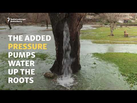 Montenegro s Gushing Water Tree