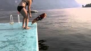 Lần đầu tiên đi bơi của cún =))