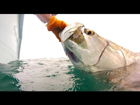 Field & Stream's Hook Shots, Season 6, Ep 4: Hell or High Water Tarpon