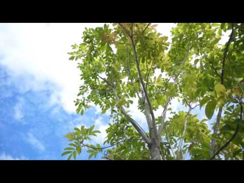 Skile panels tree video graphic