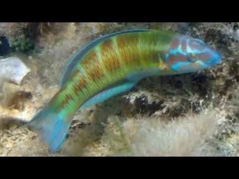 Snorkelen in Zakynthos