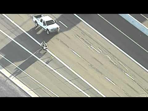 Perrito rescatado en la autopista