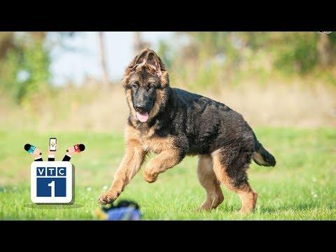 Vô tư thả chó dữ tại công viên - Thời lượng: 3 phút, 1 giây.