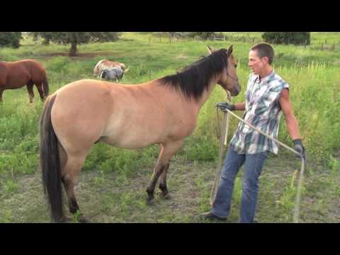 Horse Power: Clare Painter / Natural Hoof Care and Trimmer
