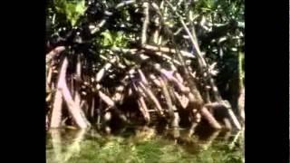 Köpek Balıkları [Türkçe Belgesel] 2