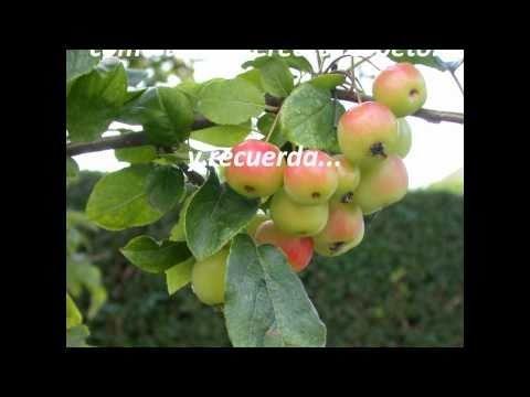 Las Mujeres Somos Como Manzanas....