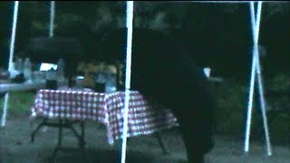 Old Forge (NY) United States  city photos : BLACK BEAR ATTACKS OUR CAMP SITE!!!!!!!! OLD FORGE NY